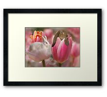 Bunny Blossoms Framed Print