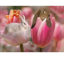 Bunny Blossoms Photographic Print