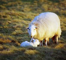 Happy Mothers Day by Michael Haslam