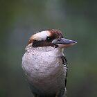 Kookaburra by Erland Howden