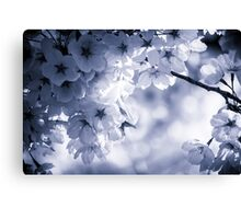 Cyan Cherry Blossoms Canvas Print