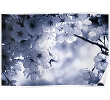 Cyan Cherry Blossoms Poster