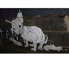 Rats Photographic Print