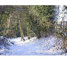 A snowy walk in the Hertfordshire countryside Photographic Print