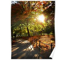 Autumn Sun in Central Park, New York City Poster