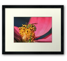 Green Wasp Framed Print
