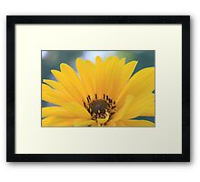 Beautiful Yellow Flower Framed Print