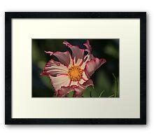 Wind Blown Flower Framed Print