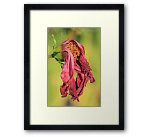 Petunia Had Better Days Framed Print