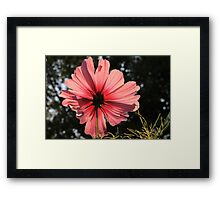 Light Through the Petals Framed Print