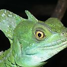 Green Basilisk by Peter Barrett