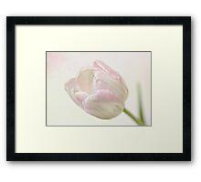 Pink sherbert Framed Print