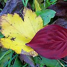 Leaves and things 2 by Nella Khanis
