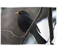 Mr Blackbird Poster