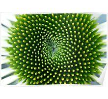 Echinacea - My Garden Poster