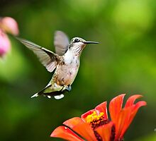 Shimmering Breeze Hummingbird Art by Christina Rollo