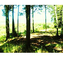 Nature Retreat Photographic Print
