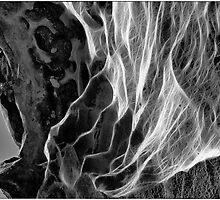 Rocky web by Adriano Carrideo