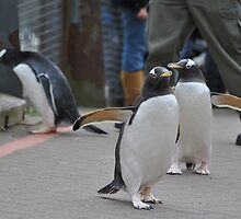 Penguin Parade by Dorothy Thomson