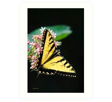 Swallowtail Butterfly on Flower Art Print