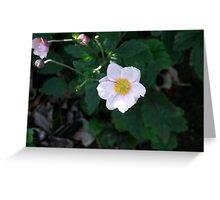Macro Flower II Greeting Card