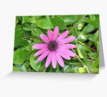 Macro Flower III Greeting Card