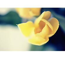 delicious moments of spring Photographic Print