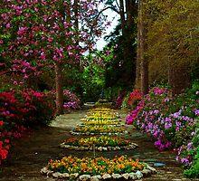 Jasmine Hill Garden by Mattie Bryant