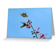 Free to Fly Greeting Card