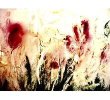 Tulip Time Photographic Print
