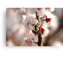 another new born flower Canvas Print