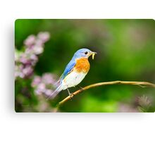 Bluebird Wall Art Canvas Print