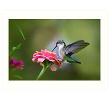 Tranquil Joy Hummingbird Art Art Print