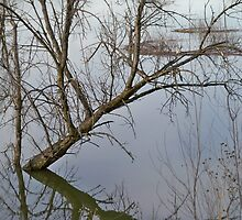Tree Reflection, Minnesota River Flood waters by Diane Trummer Sullivan