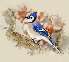 Bluejay Watercolor Bird Art by Christina Rollo