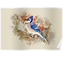 Bluejay Watercolor Poster