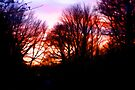 """Red Skies at Night by Christine """"Xine"""" Segalas"""