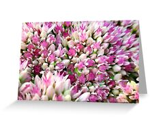 Abstract Pink Flower Greeting Card