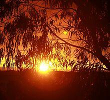 Suburban Sunset by norgan
