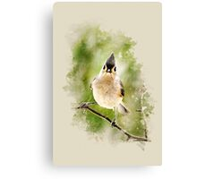 Tufted Titmouse Watercolor Art Canvas Print