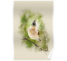 Tufted Titmouse Watercolor Art Poster