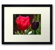 Tulips, Pink Frilly with Queen of the Night Framed Print