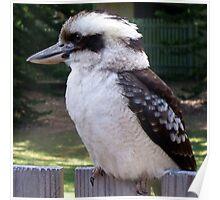 Kookaburra 2 Poster