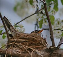Robins Nest  by AnnDixon