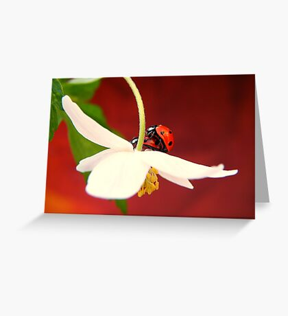 Let's multiply Greeting Card