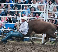 Cow Wrestling by gary A. trounson