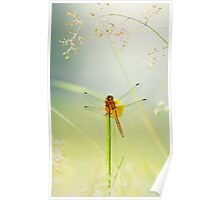 The dragonfly in the dew  Poster