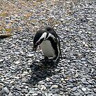 Penguin by Ellen Rosen Singer