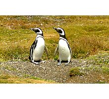 Penguin Friends Photographic Print