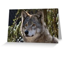 Canis Lupus Rotterdammus Greeting Card